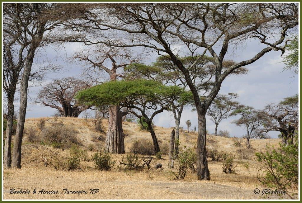 Northern Tanzania-A Photo Safari