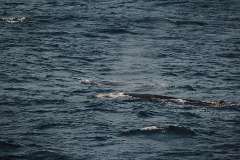 Whale Festival | Cape Spear Lighthouse National Historic Site and Petty Harbour Mini Aquarium