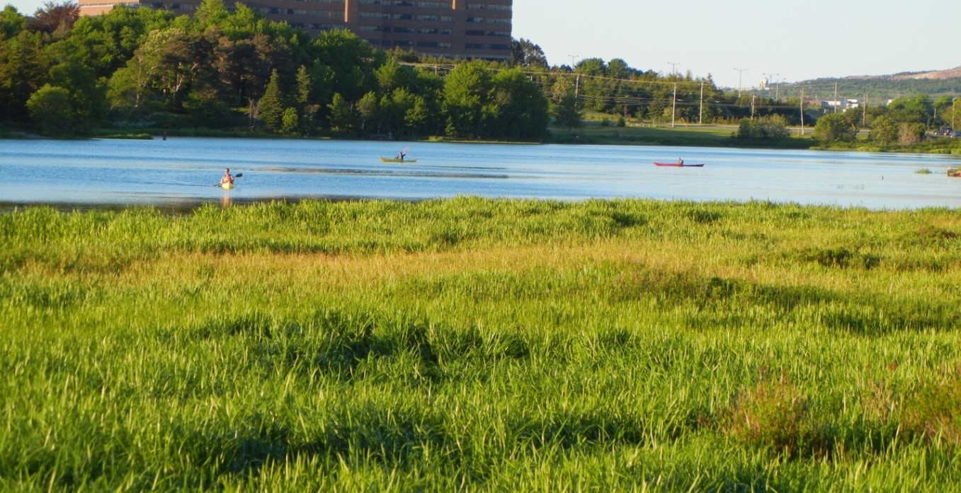Nature and natural flood control in the heart of St. John's:  Long Pond and Rennie's River