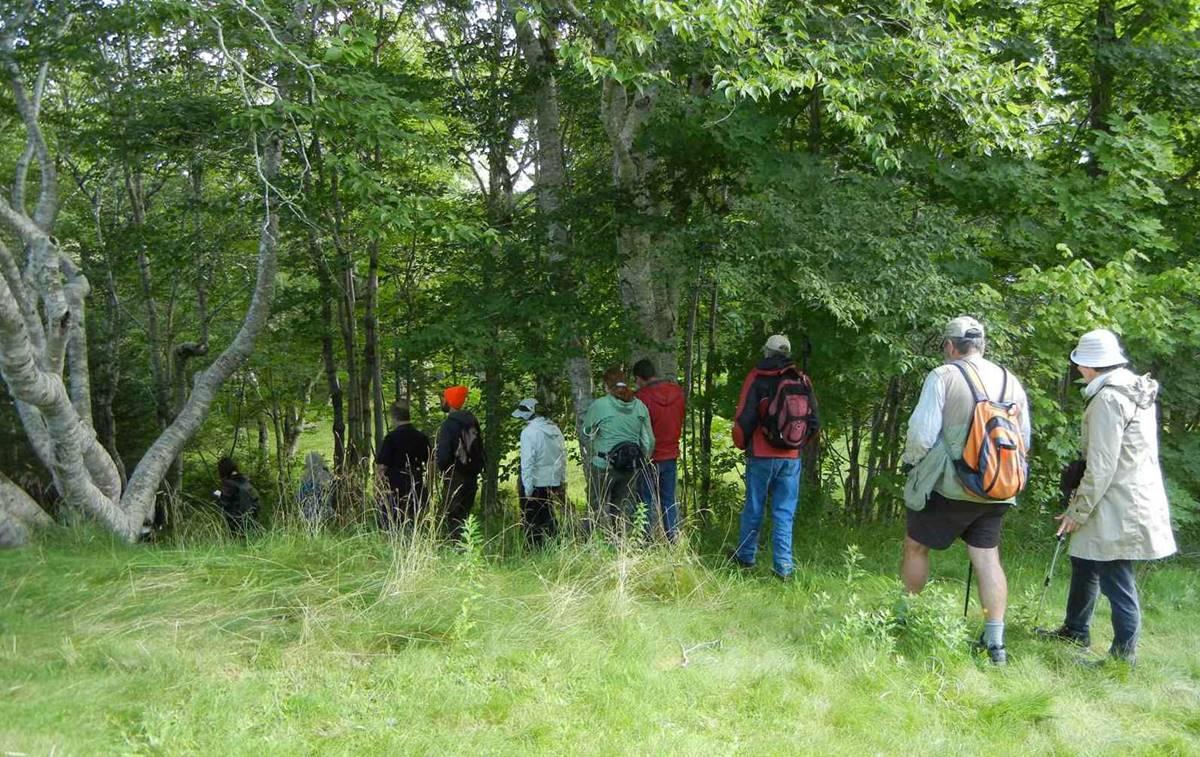 Lichen Field Trip to Sir Robert Bond Park (2016-08-20)