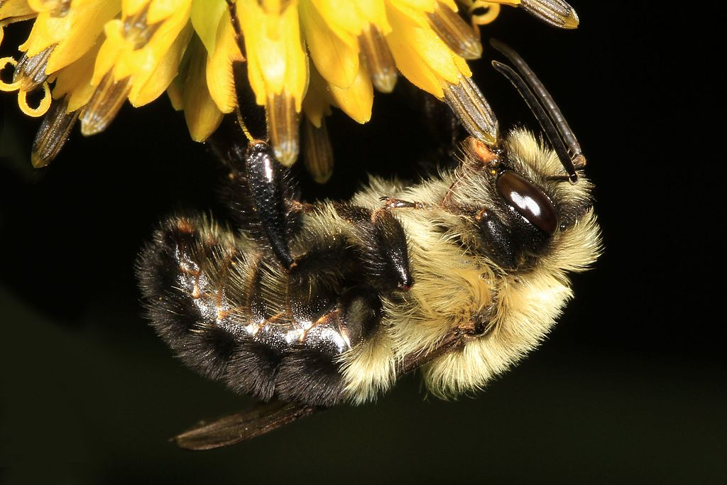 Bees, Agriculture and the Precautionary Principle