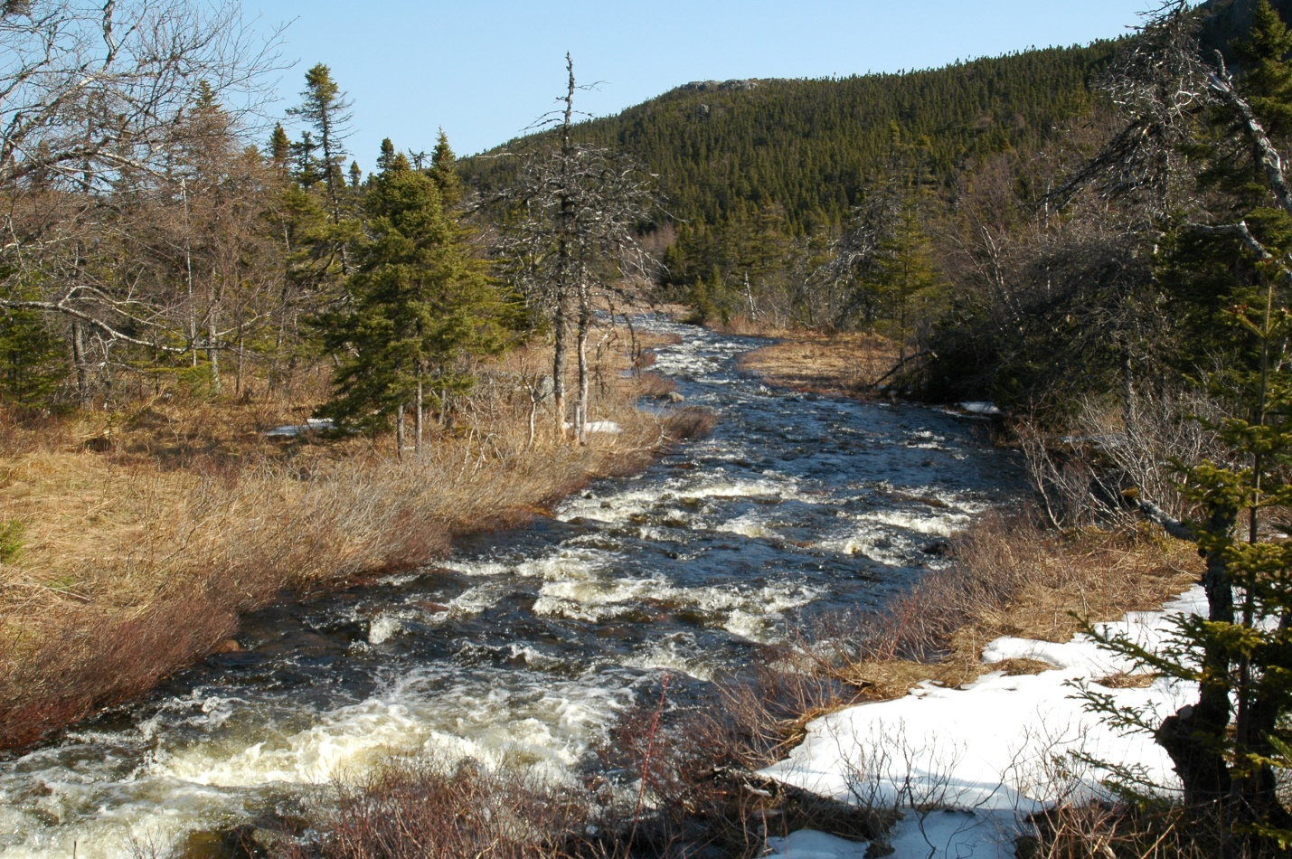 Will Newfoundland and Labrador declare more protected areas in 2018?