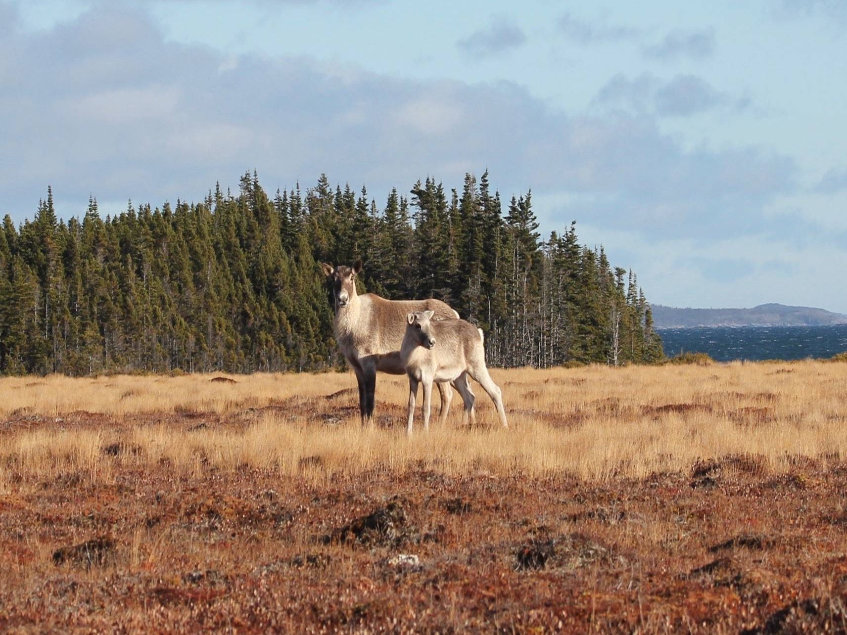 Research Spotlight Series: Wildlife Evolutionary Ecology Lab