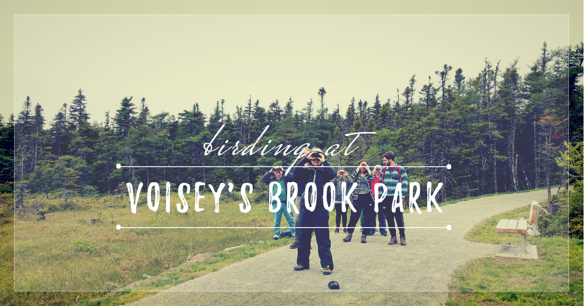 Birding at Voisey's Brook