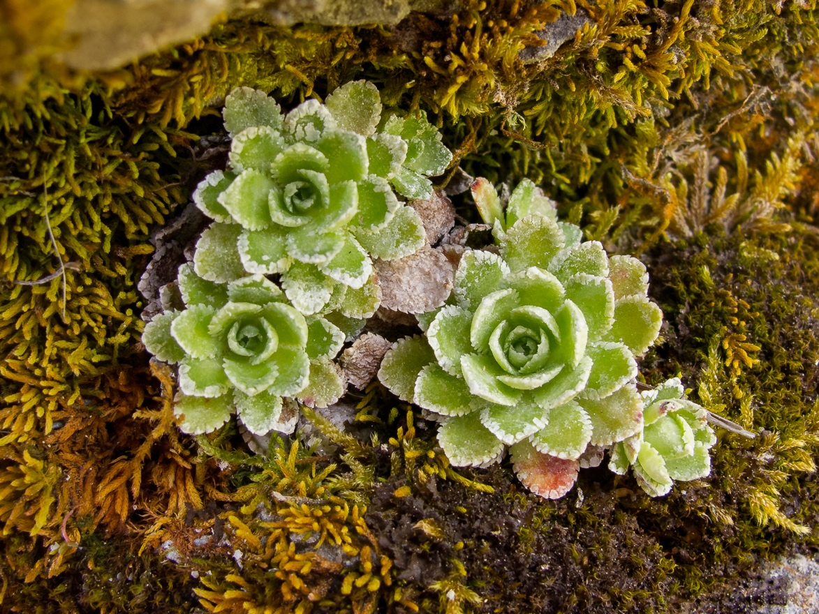 5 Neat Things about Microplants