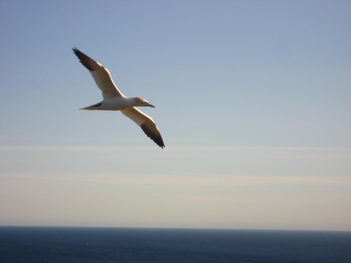 Celebrating World Migratory Bird Day!