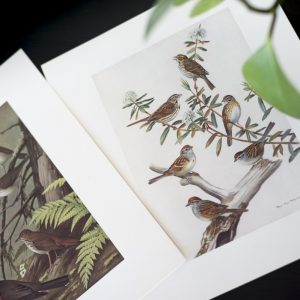 Birds of NL prints – sparrows / thrushes