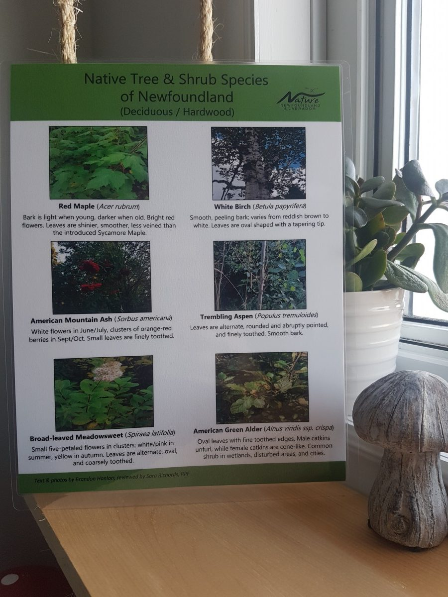 Nature NL's Native Tree and Shrub Guide